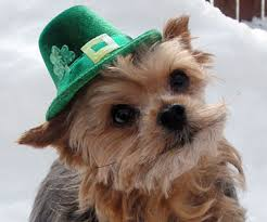 20 animals celebrating st patrick u0027s day gurl com gurl com