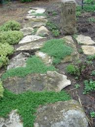 Backyard Ground Cover Options Herbal Ground Cover Corsican Mint U0026 White Creeping Thyme