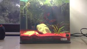idee deco aquarium décorer son aquarium youtube