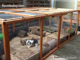 Rabbit Hutch For Multiple Rabbits Rabbit Accommodation Housing Ideas For Bunny Rabbits Best 4 Bunny