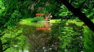 forest nature forest house lake awesome wallpapers hd 16 9 high