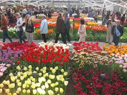 flower garden in amsterdam tulips in amsterdam central coast gardening