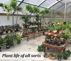 Nursery Plant Supplies by Welcome To Weathertop Nursery Garden Supplies Laytonville