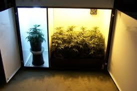 northern lights grow box q a with jorge bloom box marijuanagrowing com