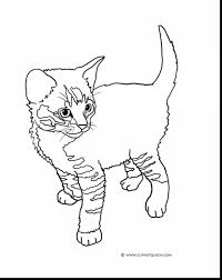 remarkable cute kitten cat coloring page with cute cat coloring