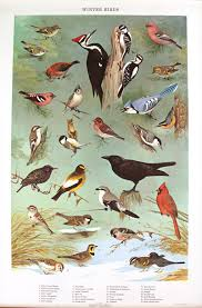 Pennsylvania birds images Igavel auctions four bird species posters pennsylvania game jpg