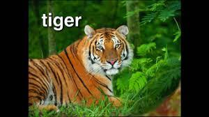 baby einstein world animal adventure u2013 part 1 youtube