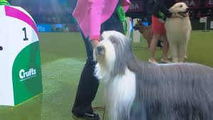 boxer dog crufts 2015 crufts 2015 2d day results friday 6 march