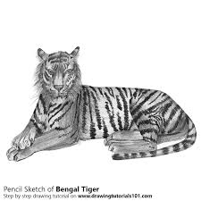 pencil drawings to draw bengal tiger pencil drawing how to sketch bengal tiger using