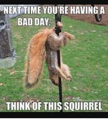 Me Next Time Meme - next time you re having a bad day think of this squirrel bad day