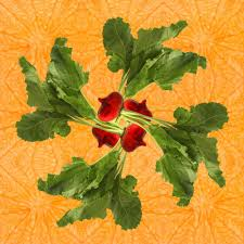 print of red beet kaleidoscope of food square u2013 fresh food prints