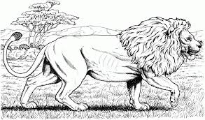male african lion coloring page printable pages click the to guard