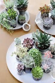 Rustikale K Hen 60 Besten Hübsche Sukkulenten Bilder Auf Pinterest Gardening