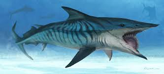 helicoprion facts and pictures