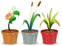 a surprisingly simple solution to bad indoor air quality potted