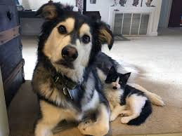 the perfect cat dog couple with a capital purrr entirely
