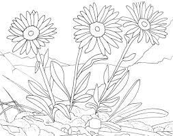 three flowers flowers coloring pages for kids to print u0026 color