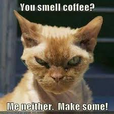 Funny Coffee Memes - 47 best coffee memes images on pinterest face skin care face