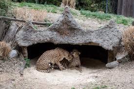 Washington wild animals images Washington dc zoo kelsey bang jpg