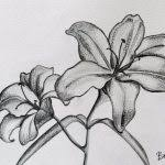 drawing of a flower in pencil best 25 pencil sketches of flowers