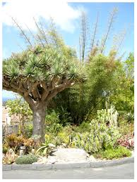 Quail Botanical Gardens Free Tuesday Walking Tour Quail Botanical Gardens Rancho Reubidoux