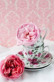 roses teacups 223 best tea cup s flowers images on flowers flower