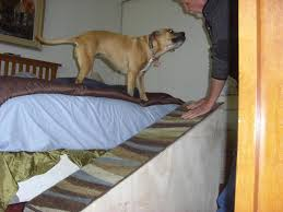 dog ramp for bed and stairs decor trends small dog ramp for bed
