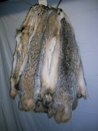Deer Hide Tanning Companies Premium 1 Tanned Furs Garment Quality