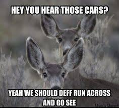 Deer Meme - nice truck be a shame if i ran into it deer meme deer hit my car