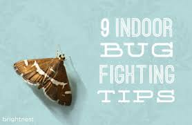 How To Find Ladybugs In Your Backyard Brightnest Shoo Fly Get Rid Of Bugs In Your Home