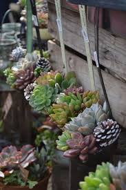Hanging Succulent Planter by 20 Succulent Planters You U0027ll Love Gardens Hens And Plants