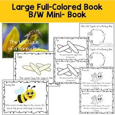 honey bee life cycle reading writing and math tpt