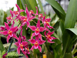 orchids pictures world orchid growers flowers mcbean s orchids
