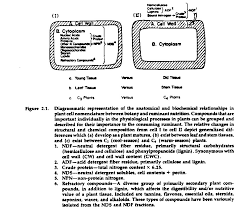 chapter 4 developmental morphology and physiology of grasses