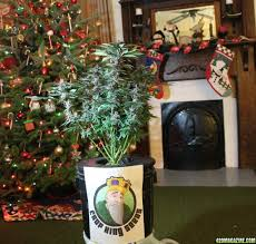 deck the halls with boughs of ganja christmas themed crop king
