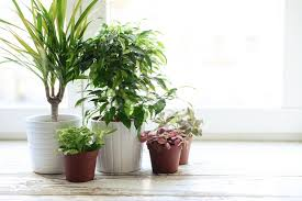 9 houseplants to clean the air u0026 improve your health