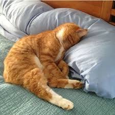 Sleepy Kitty Meme - current mood one small cat pinterest current mood cat