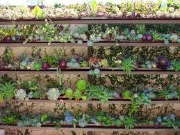 Succulents That Don T Need Light Ultimate Guide To Succulents Succulent Care World Of Succulents