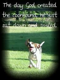 bluetick coonhound drool treeing walker coonhound dog breed information treeing walker
