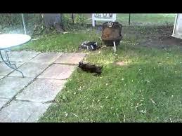 Dog Burial Backyard Viking Rat Burial Youtube