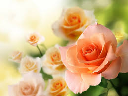 Flower Rose Backgrounds Rose Flower Beautiful Nature Pink With Flowers
