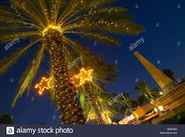 palm tree christmas tree lights palm trees decorated with christmas lights in the normandy isle