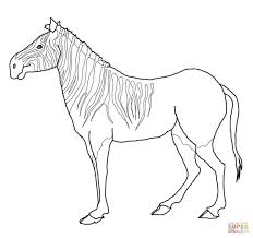 quagga zebra coloring page free printable coloring pages