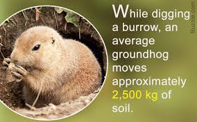 wonderfully astounding facts about groundhogs