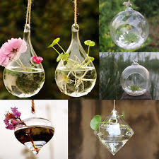 clear plastic fish shape flower hydroponics terrarium hanging