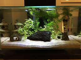 Fluval Edge Aquascape My Planted Fluval Edge 6 Gallon Album Inside Plantedtank
