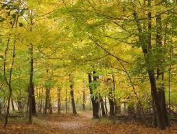 autumn foliage in garden state