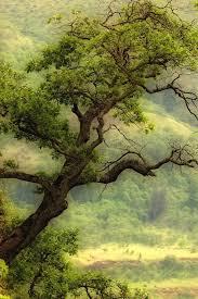 green tree wallpaper beautiful green tree iphone hd nature