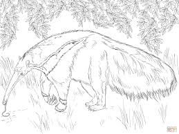 giant anteater looking for food coloring page free printable