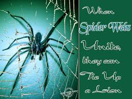spider webs unite they can tie up a lion